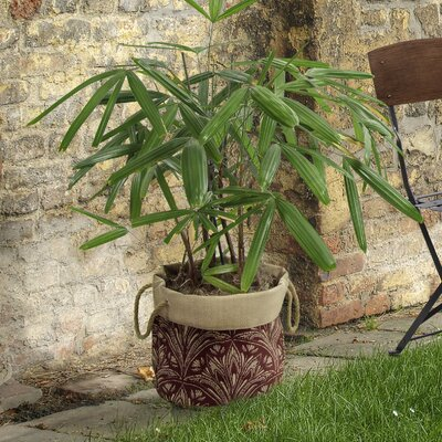 Zanzibar Fabric Pot Planter BombayOutdoors Color: Berry