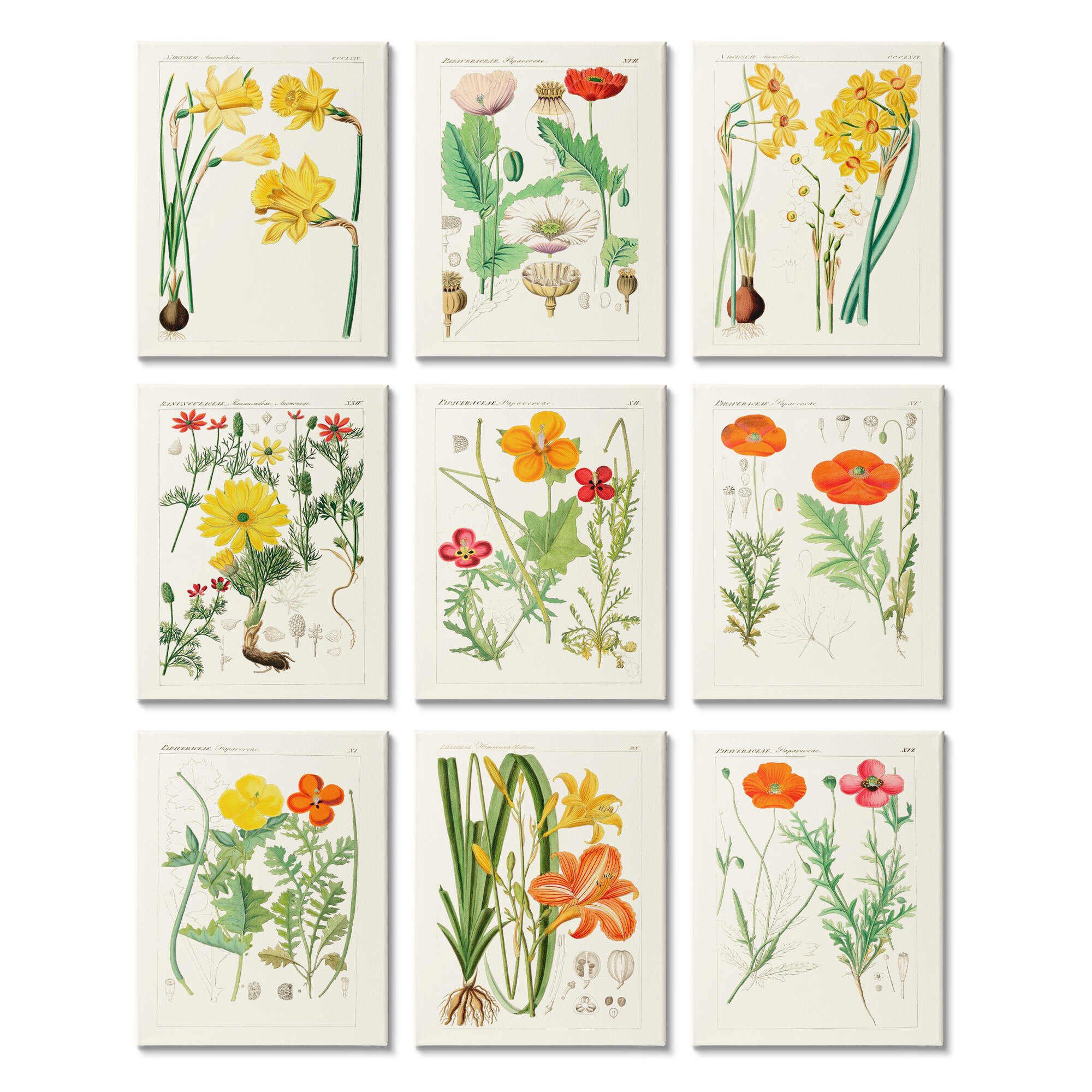 Rosalind Wheeler Vibrant Botanical Scientific Study Vintage Florals 9 Piece Graphic Art Print Set Wayfair
