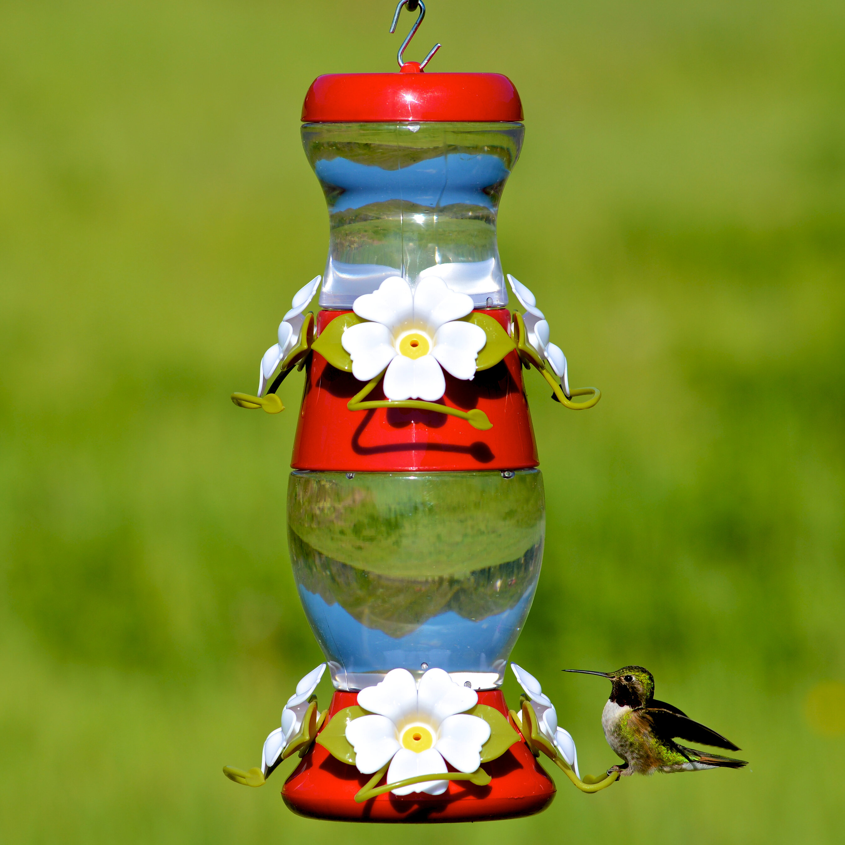 decorative how perches your grande diy own hummingbird feeder a food then feeders gh to using homemade make step recyclable best hairy