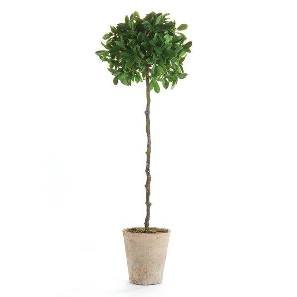 Outdoor Topiary Tree Joss Main