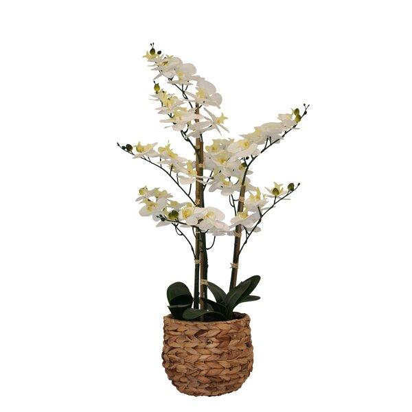 Artificial Orchid Arrangement Wayfair