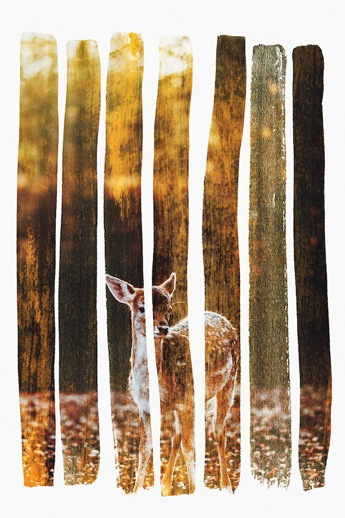 East Urban Home Fawn Iv Photographic Print On Wrapped Canvas Wayfair