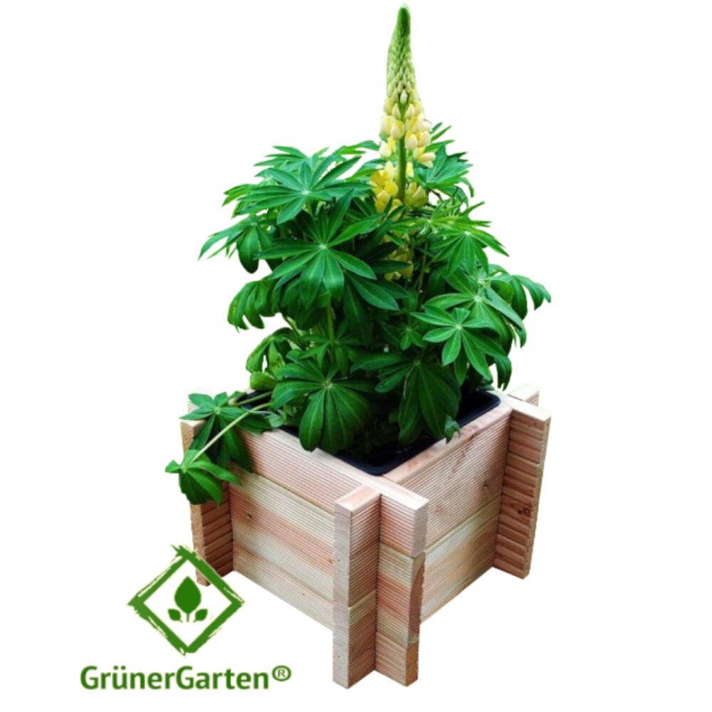 Zamarripa Wooden Planter Box