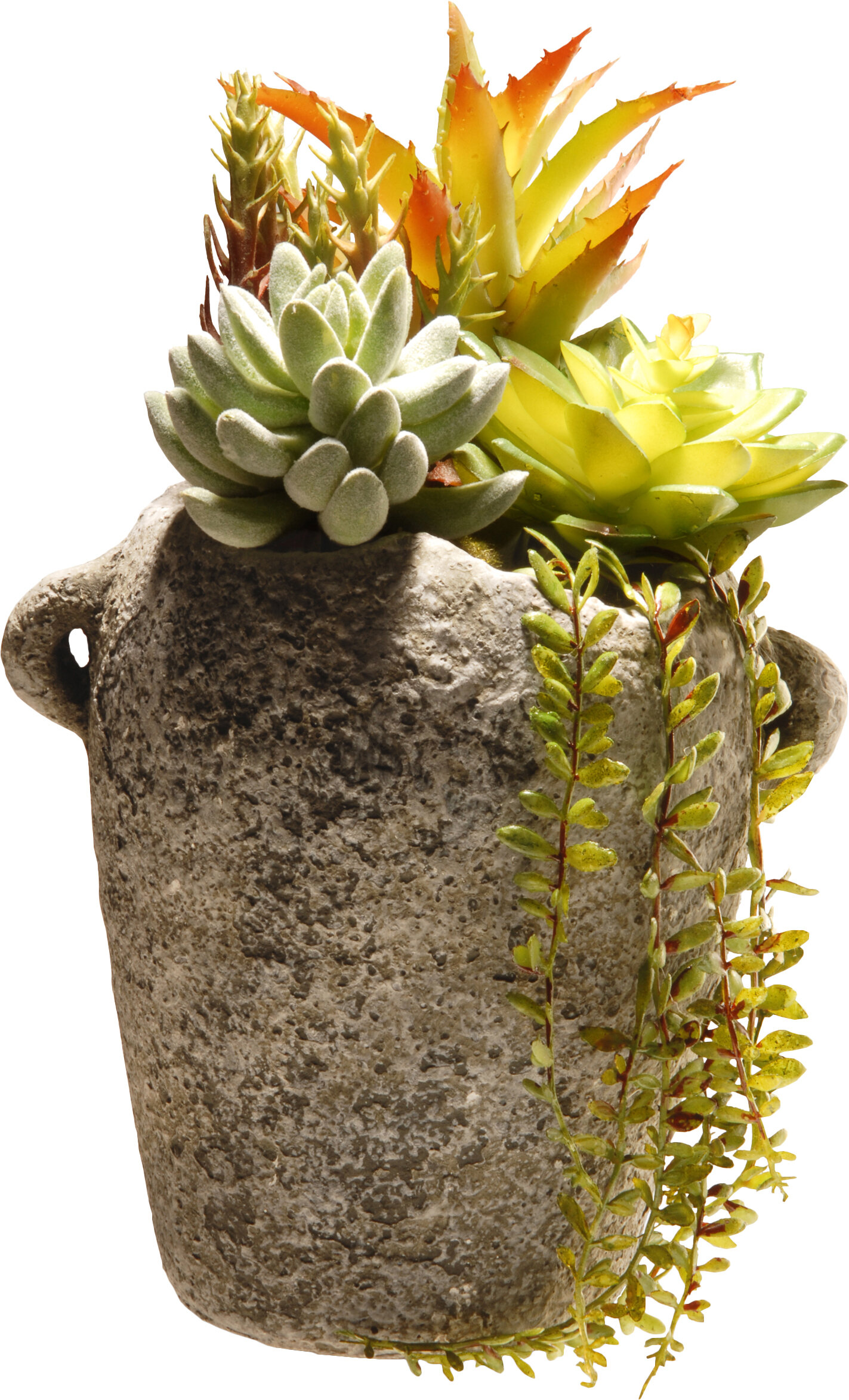 National Tree Co Succulent Desk Top Plant In Urn Reviews Wayfair