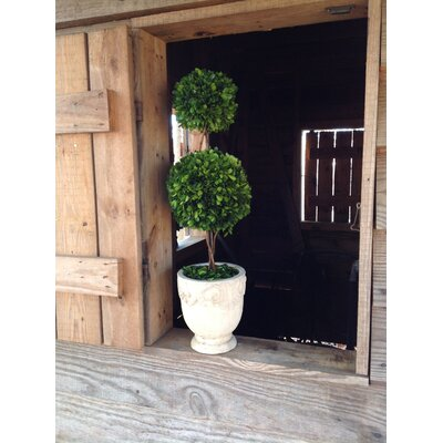 Flora Decor Preserved Boxwood Ball 4