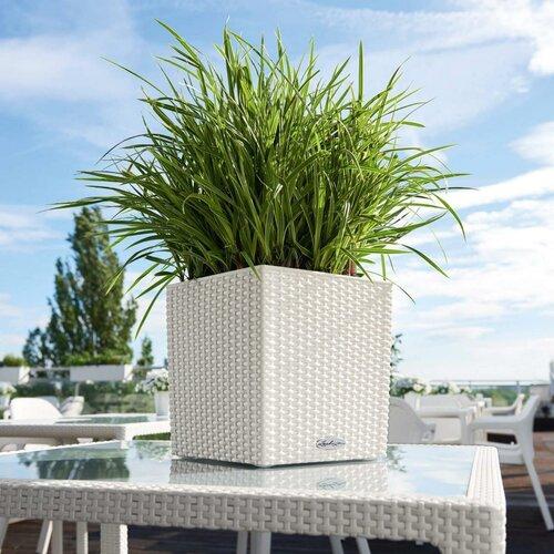 Rattan Self-Watering Planter Box Lechuza Colour: White,