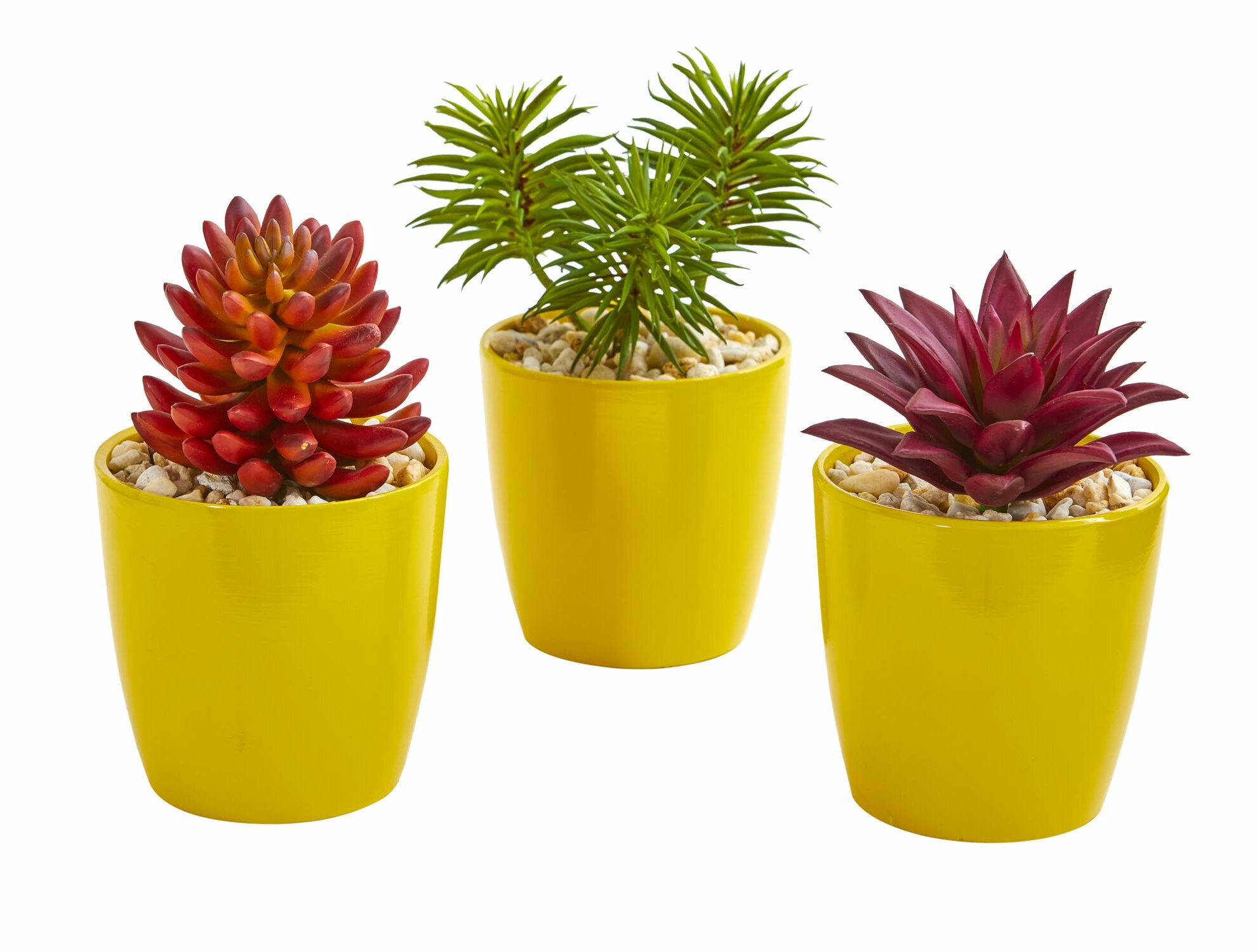 Primrue 3 Piece Artificial Mixed Cactus Succulent Plant In Decorative Vase Set Wayfair