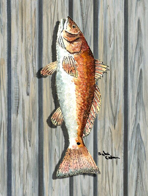 Caroline S Treasures Fish 2 Sided Polyester 40 X 28 In House Flag Wayfair