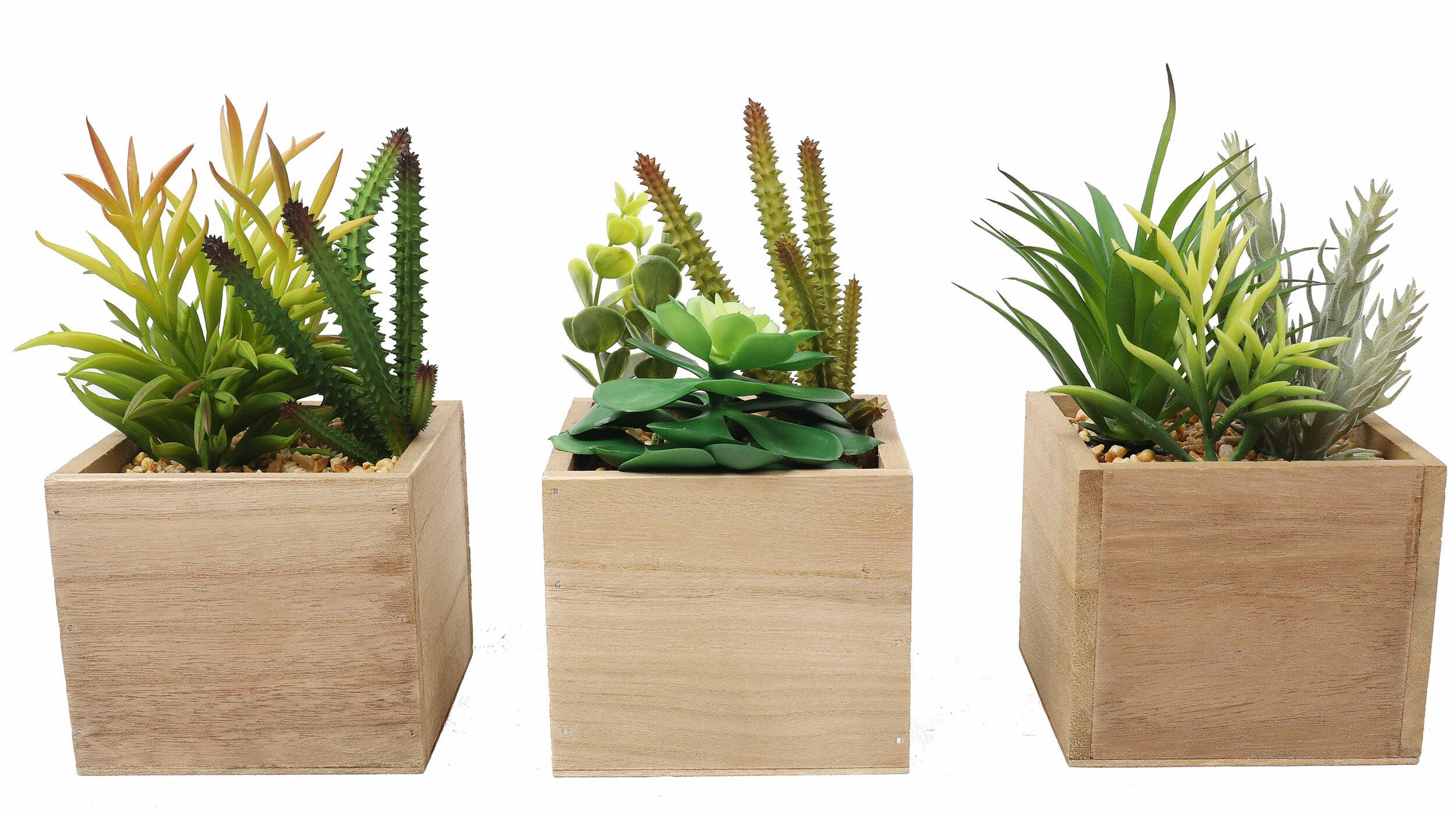 Union Rustic 3 Artificial Assorted Cactus Succulent In Pot Set Reviews Wayfair