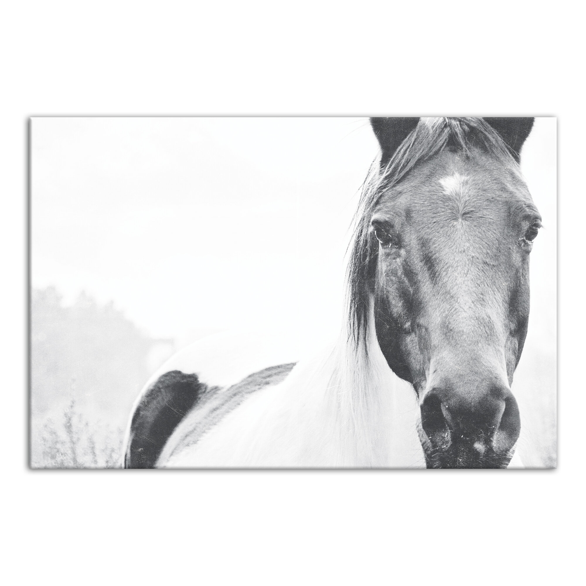 Union Rustic Lone Horse Graphic Art Print On Canvas Reviews Wayfair