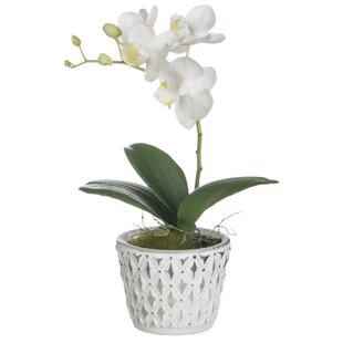 Desktop Phalaenopsis Orchids Floral Arrangement in Pot (Set of 2)