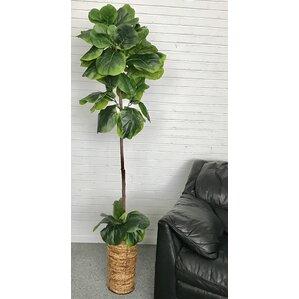 fiddleleaf fig palm tree in basket - Silk Trees