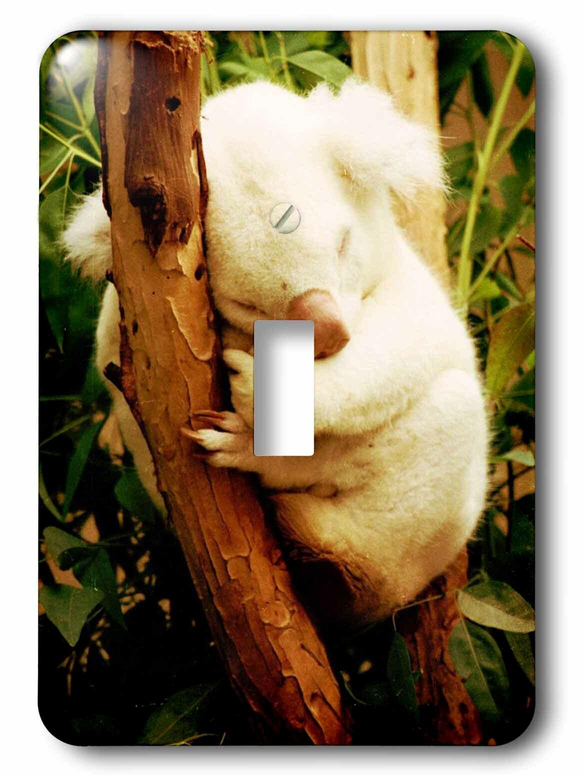 3drose Australia Koala Bear 1 Gang Toggle Light Switch Wall Plate Wayfair Ca