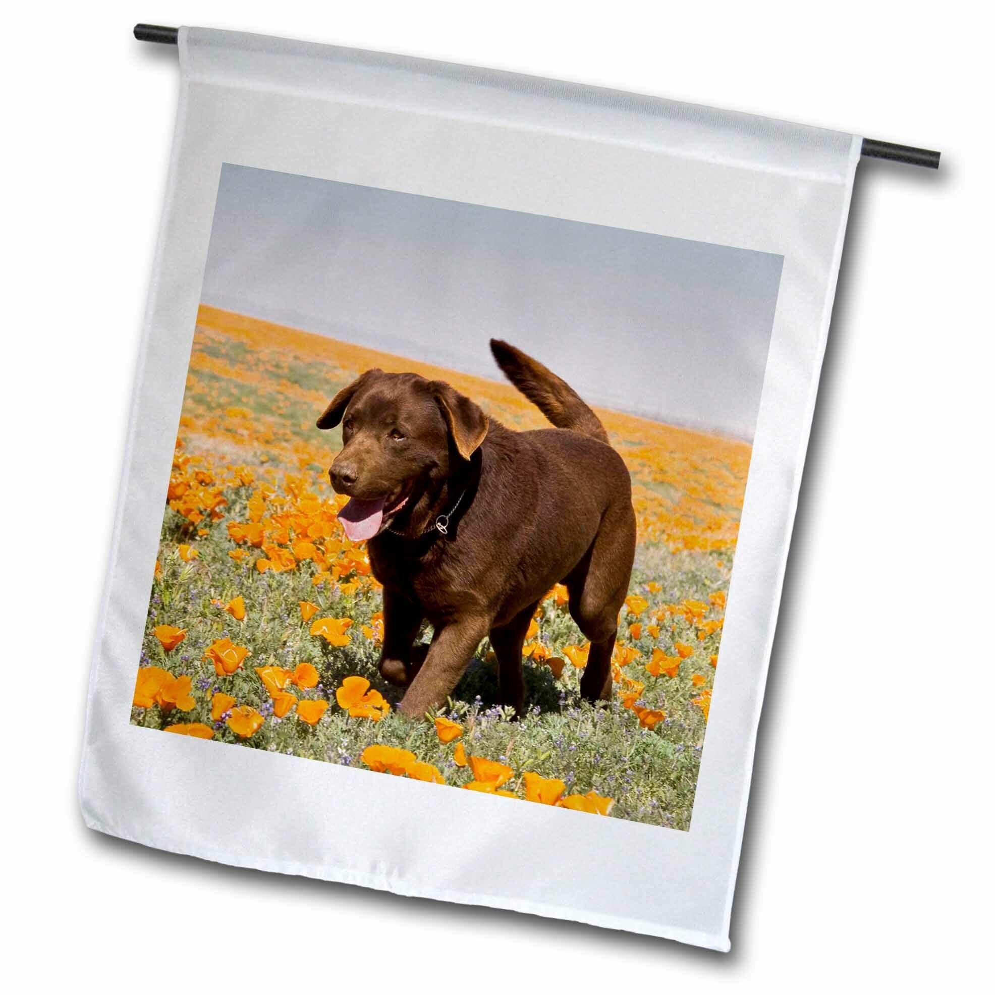 3drose A Chocolate Labrador Retriever Dog Polyester 18 X 12 In Garden Flag Wayfair