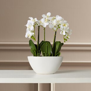 Magnolia silk flowers wayfair phalaenopsis silk flowers in pot mightylinksfo Choice Image