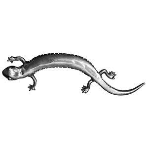 Lizard 1 3/5