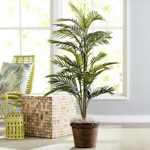 Bermudiana Palm Tree in Basket