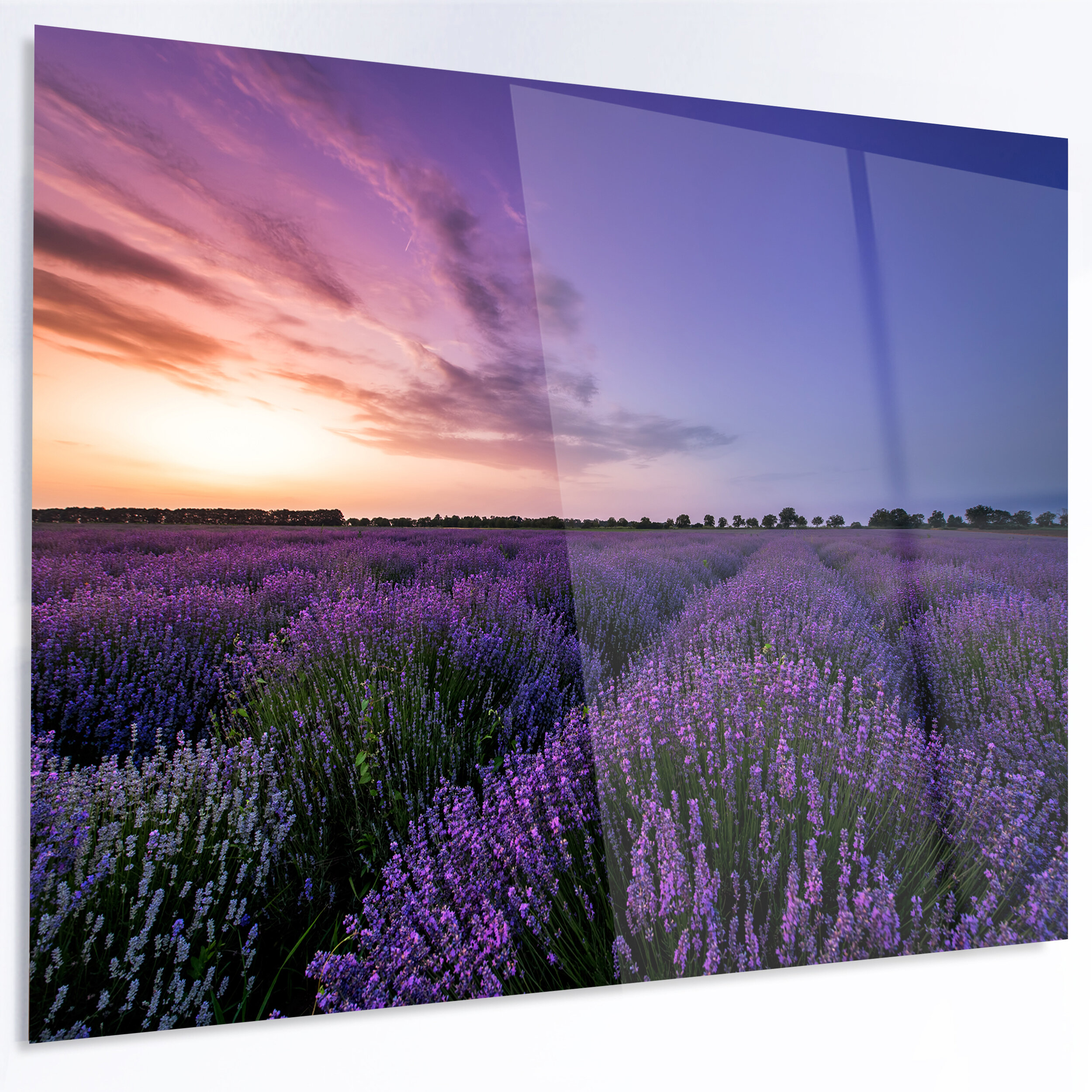 Designart beautiful lavender flowers at sunset photographic print designart beautiful lavender flowers at sunset photographic print on metal wayfair izmirmasajfo
