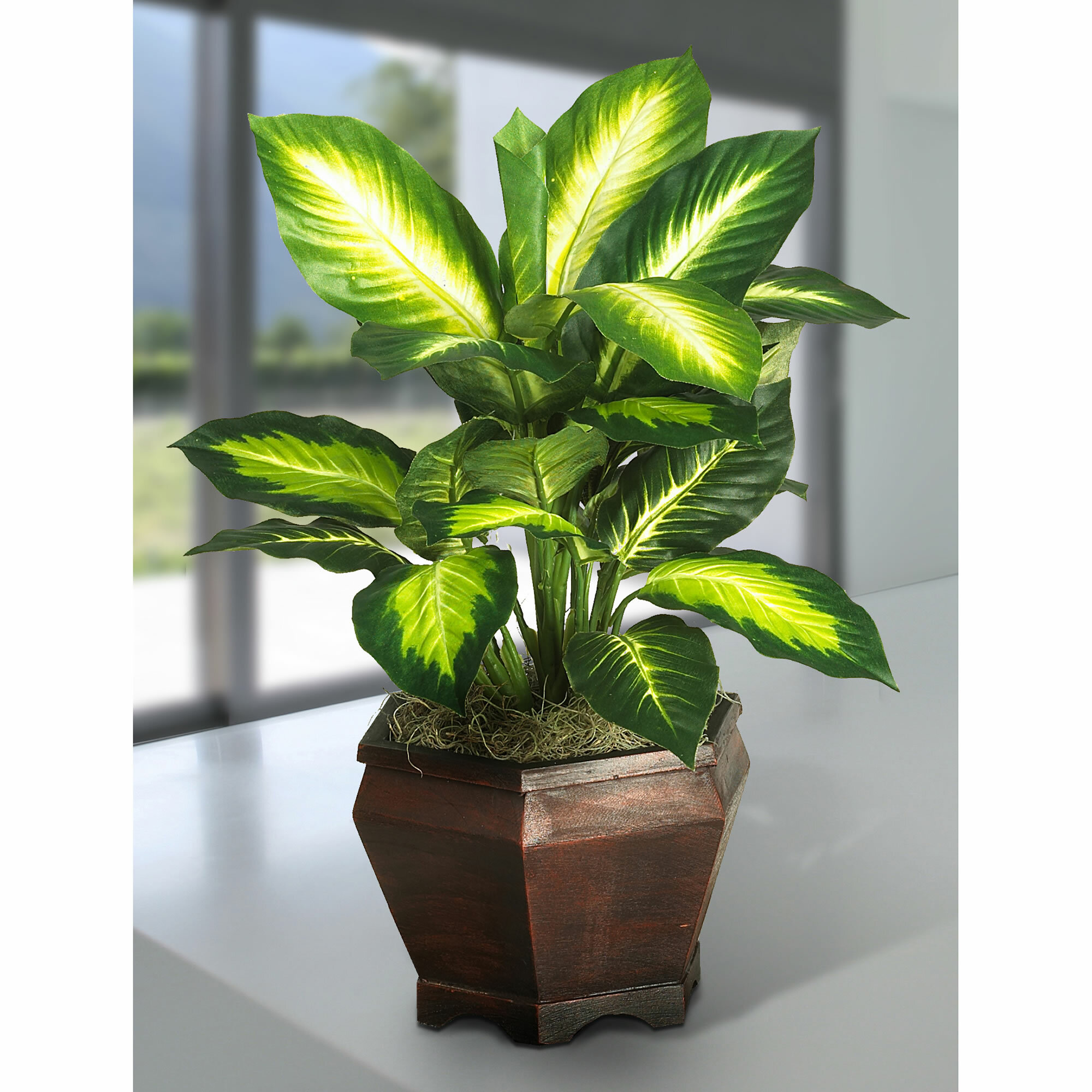 Bay Isle Home 20 5 Artificial Silk Golden Dieffenbachia Desk Top Foliage Plant In Planter Reviews Wayfair