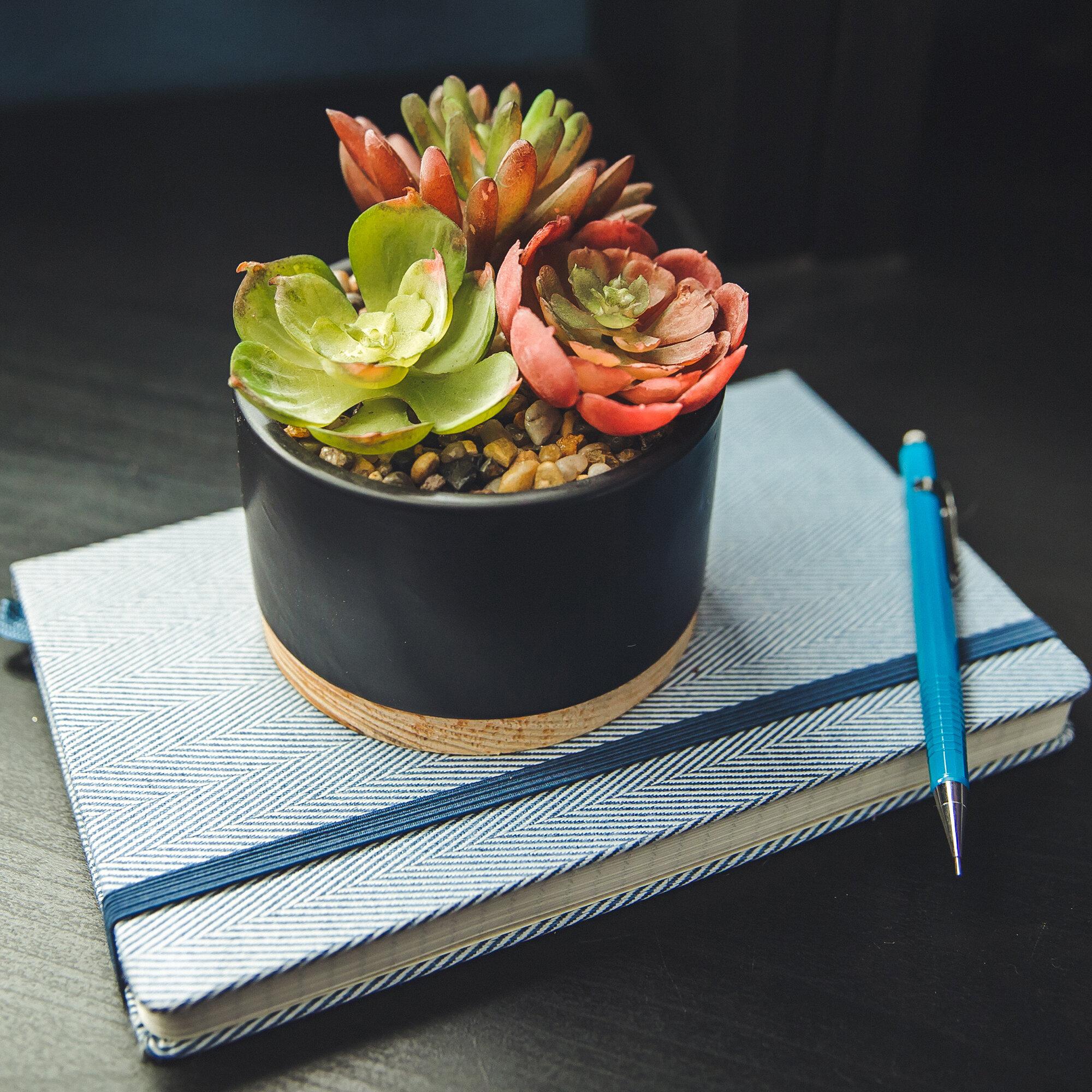 Ebern Designs Mix Desktop Succulent Plant In Planter Reviews Wayfair