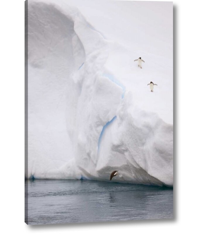 World Menagerie Antarctica Adelie Penguin Diving Off An Iceberg Photographic Print On Wrapped Canvas Wayfair
