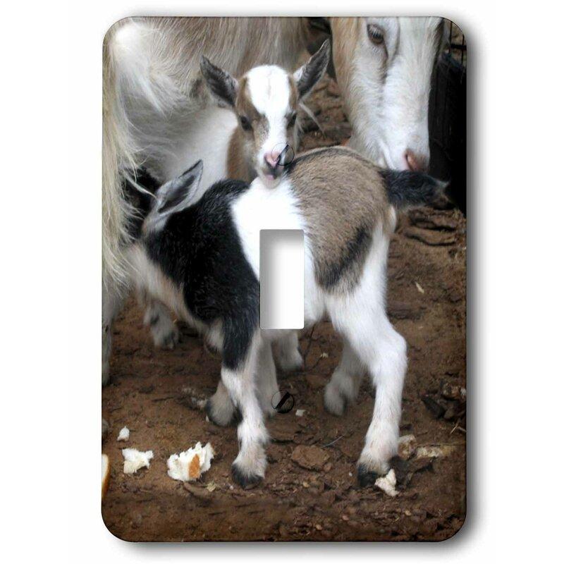 3drose Pygmy Goat Family 1 Gang Toggle Light Switch Wall Plate Wayfair