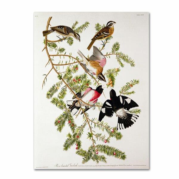 Trademark Art Rose Breasted Grosbeak By John James Audubon Painting Print On Wrapped Canvas Wayfair