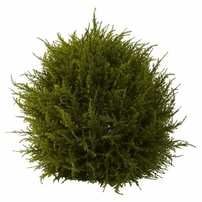 Alcott Hill Cedar Decorative Sphere Topiary