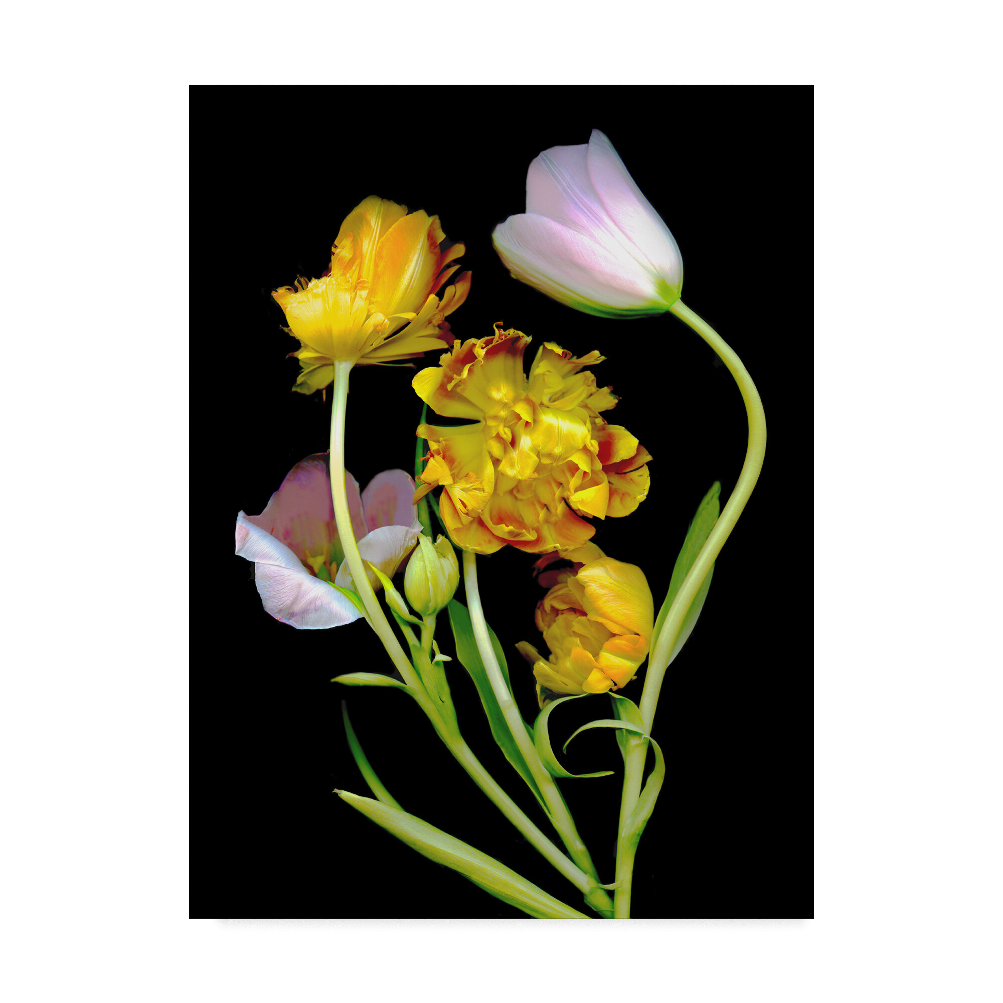 Trademark Art Tulips 2 Graphic Art Print On Wrapped Canvas Wayfair