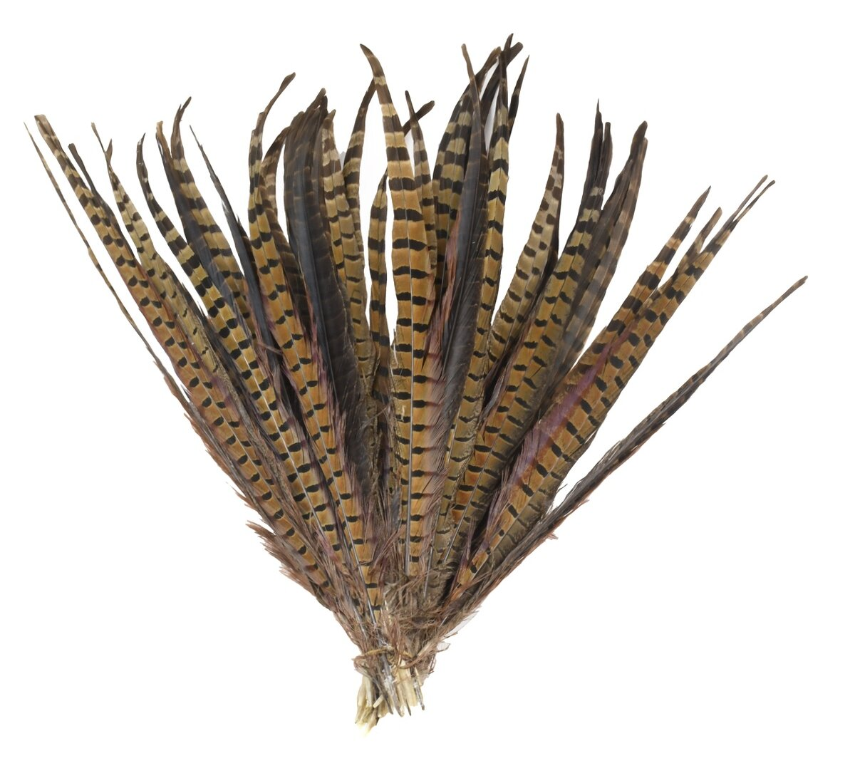 Fern Feather Decor Decorative Objects You Ll Love In 2021 Wayfair