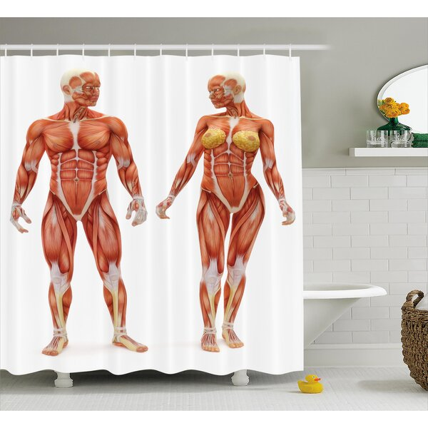 Ambesonne Human Anatomy Male And Female Bodies With Inner Mass Build  Display Muscle System Graphic Print Shower Curtain U0026 Reviews   Wayfair