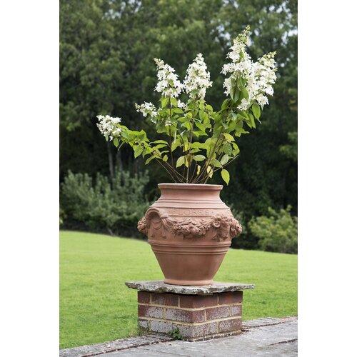 Pennypacker Fibreglass Urn Planter Astoria Grand Colour: Ter