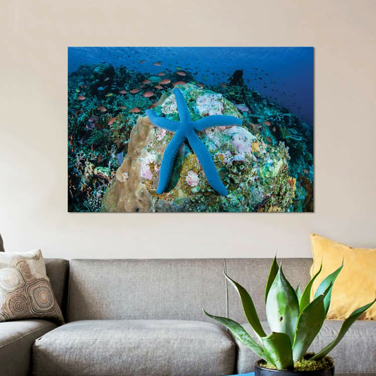 East Urban Home A Blue Starfish Clings To A Coral Reef In Indonesia Photographic Print On Canvas Wayfair