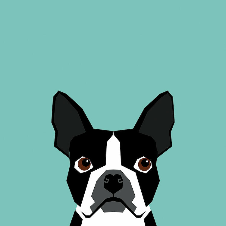 East Urban Home Boston Terrier Graphic Art On Wrapped Canvas Wayfair