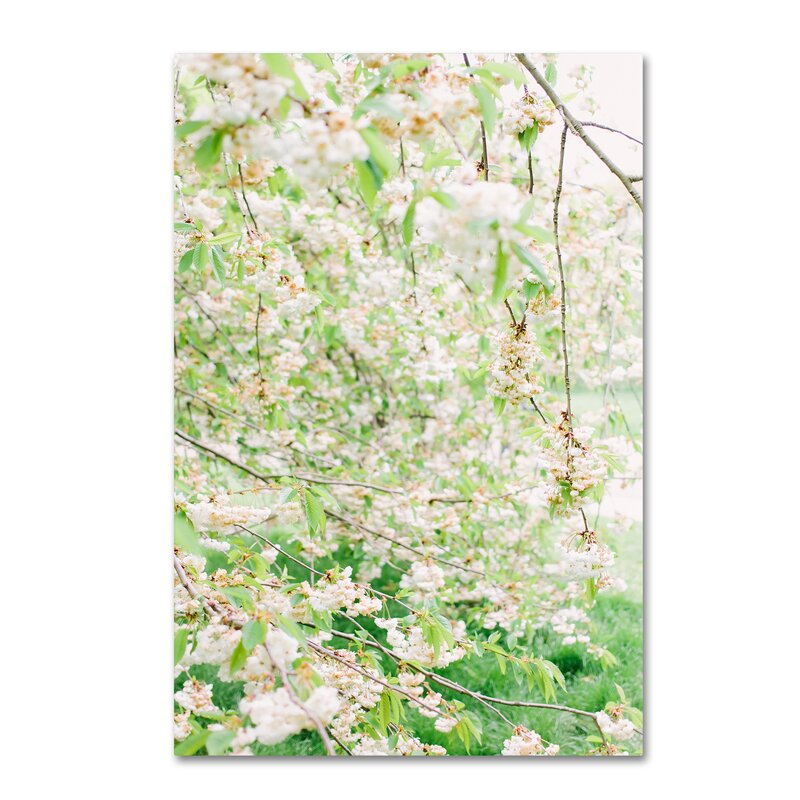 Trademark Art White Cherry Blossom Trees 4 Photographic Print On Wrapped Canvas Wayfair