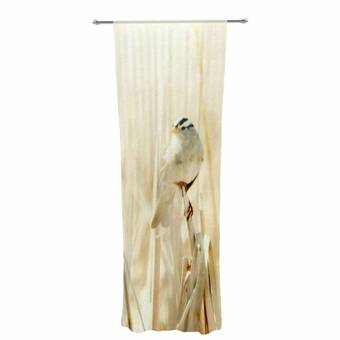 Kess InHouse Angie Turner Hermit Crab Brown Photography Decorative Set 30 x 84 Sheer Curtains