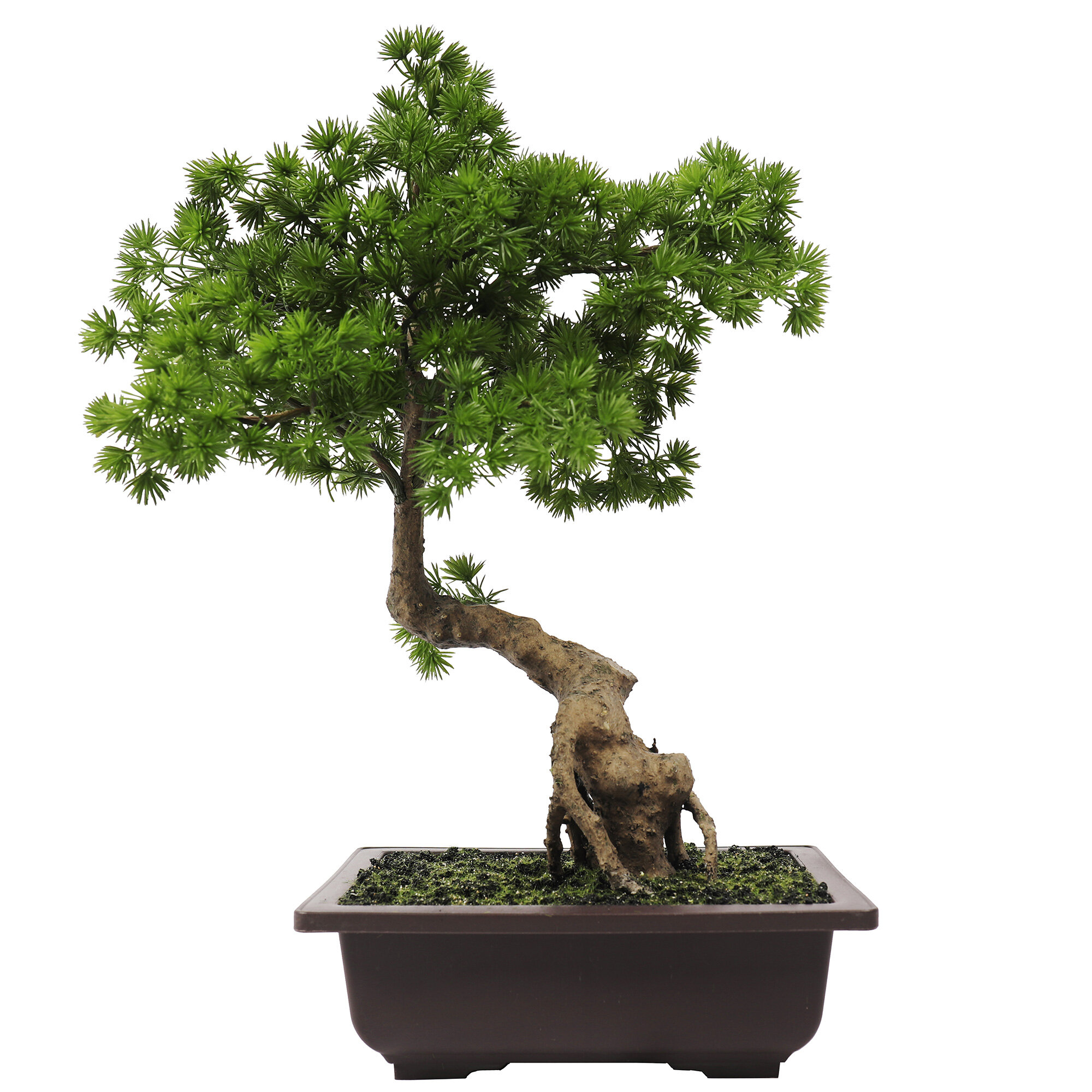 Bloomsbury Market 15 Artificial Pine Bonsai Tree In Pot Reviews Wayfair
