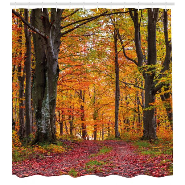 Ebern Designs Xanthe Autumn Fall Forest With Shady Deciduous Trees And Faded Leaf Magic Woodland Picture Single Shower Curtain Wayfair