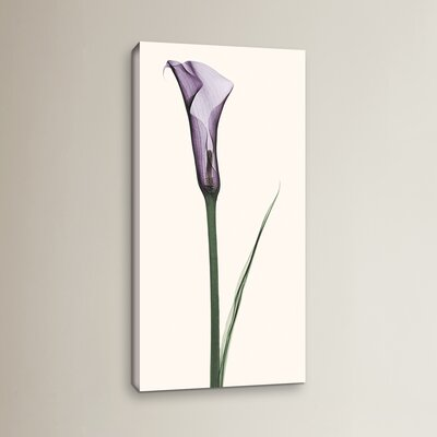 """Calla Lily Graphic Art on Wrapped Canvas Lark Manor Size: 36"""" H x 18"""" W x 2"""" D"""
