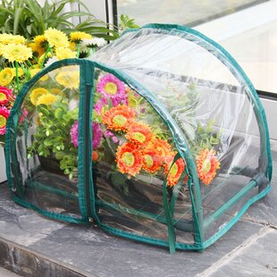 Zenport 1.5 Ft. W x 1 Ft. D Mini Greenhouse