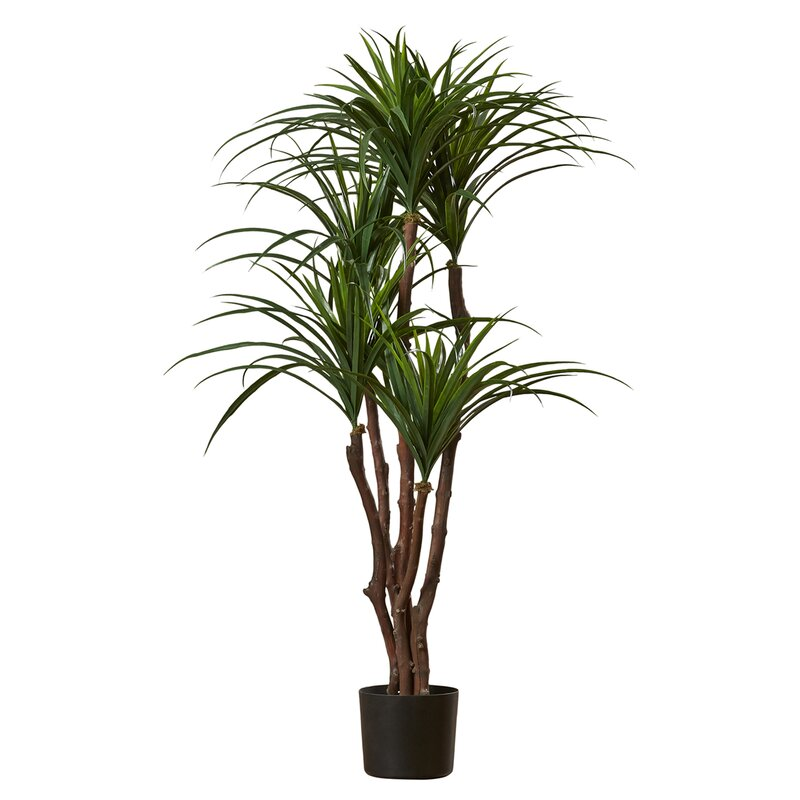 Tropical Yucca Tree In Pot Reviews Joss Main