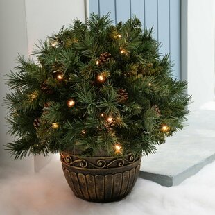 Pre-Lit Potted Bush With 50 LED Lights And Pine Cones Lighted Display With Timer Control Image