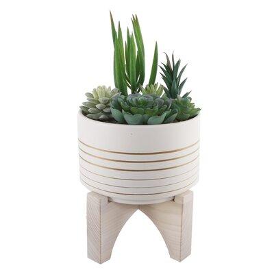 Bloomsbury Market Succulent Plant in Pot Base Color: White