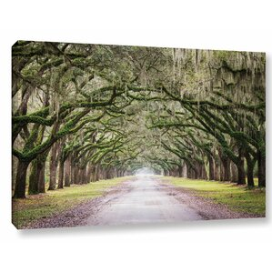 'Oak Trees with Spanish Moss in Savanna Georgia' by Cody York Photographic Print on Wrapped Canvas