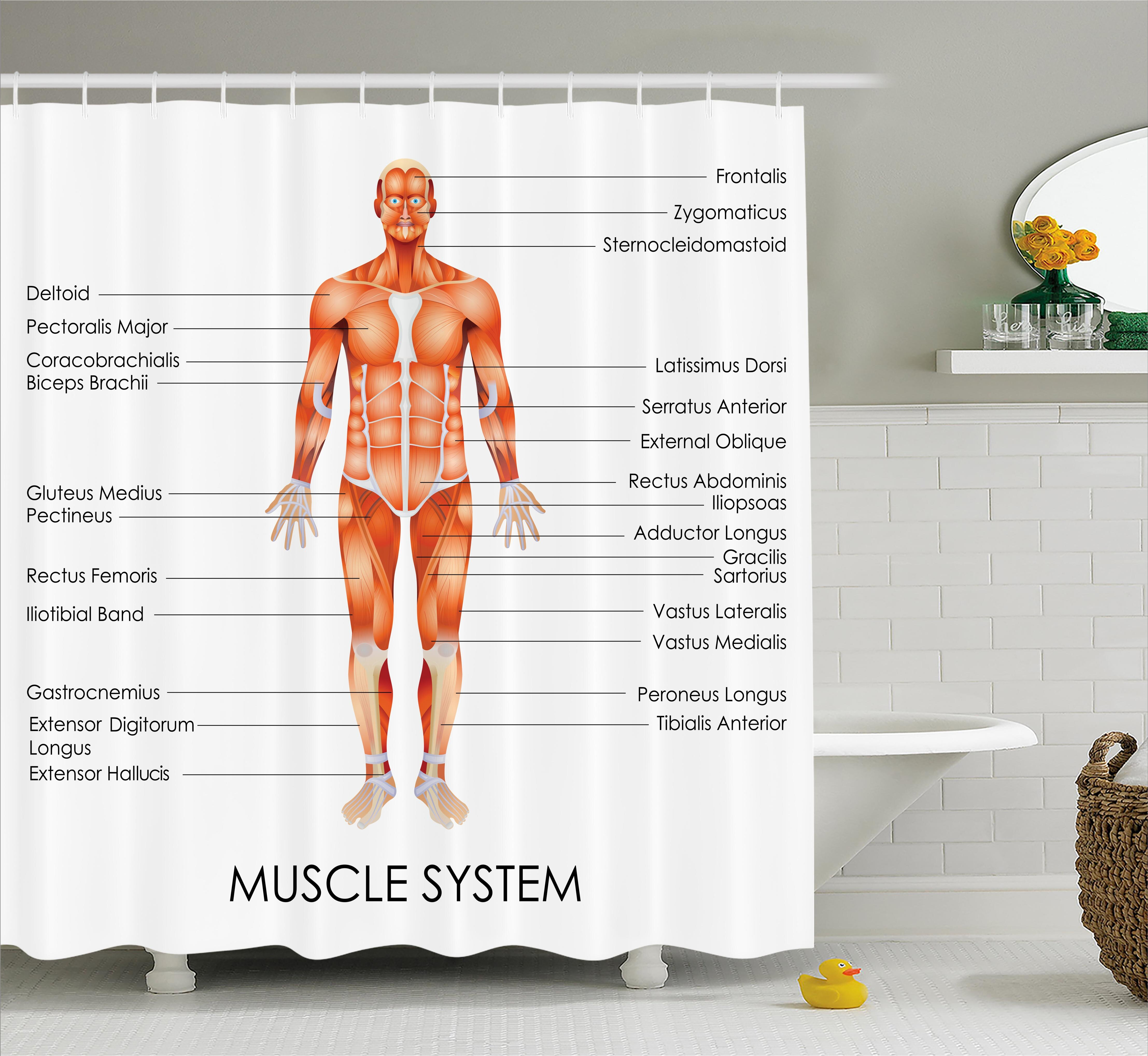 Ambesonne Human Anatomy Muscle System Diagram Of Man Body Features