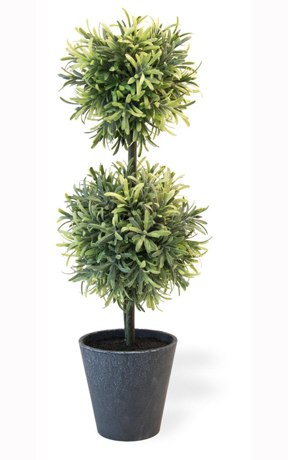 Fleur De Lis Living Rosemary Ball Topiary Herbs In Pot Reviews Wayfair