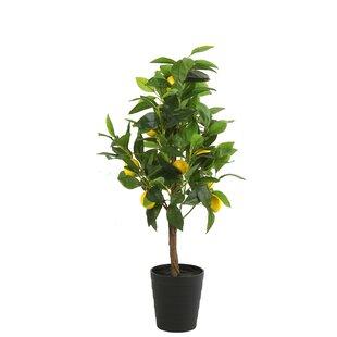 Citrus Lemon Artificial Plant In Pot (Set Of 2) Image
