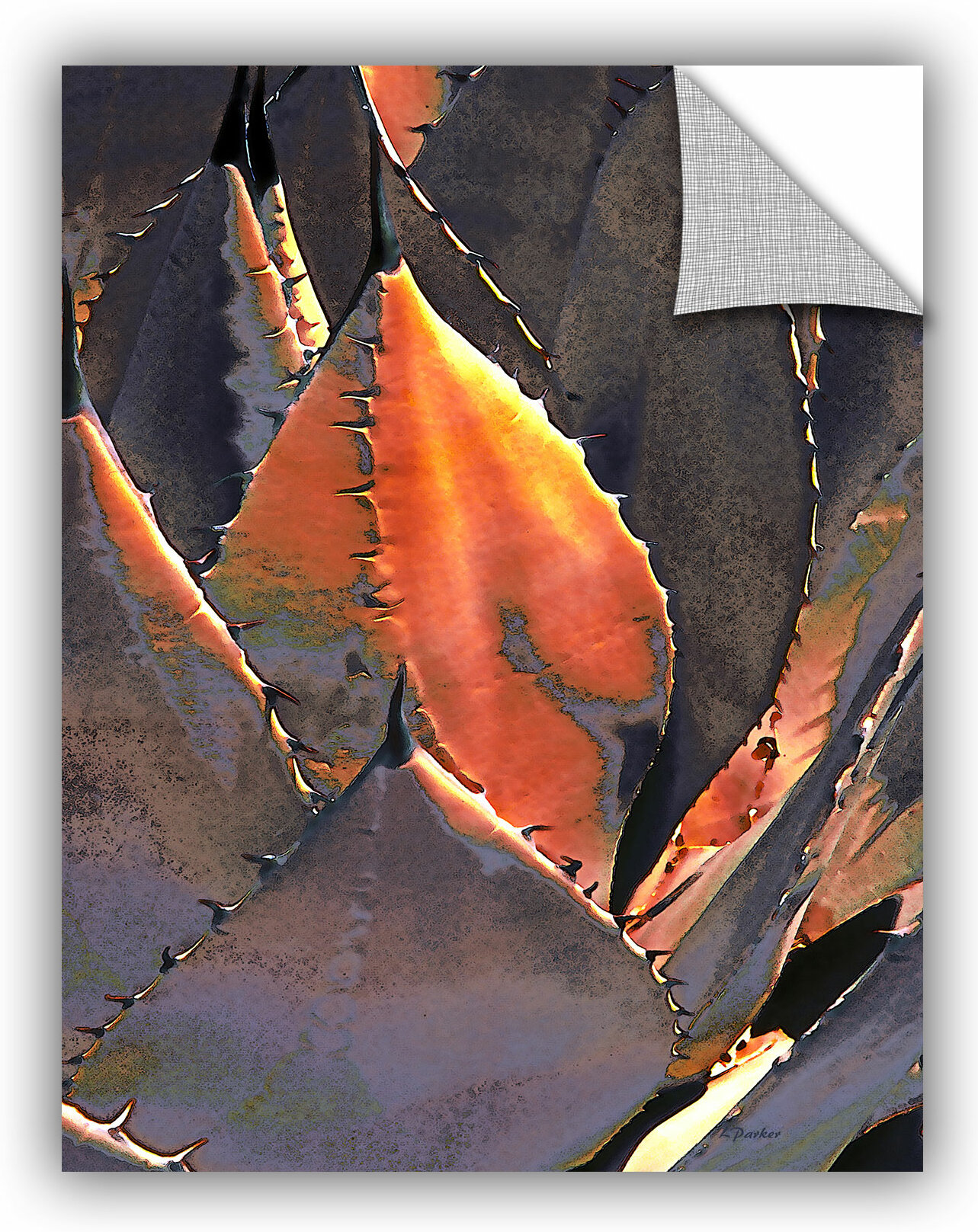 Artwall Agave Sunset By Linda Parker Photographic Print Removable Wall Decal Wayfair