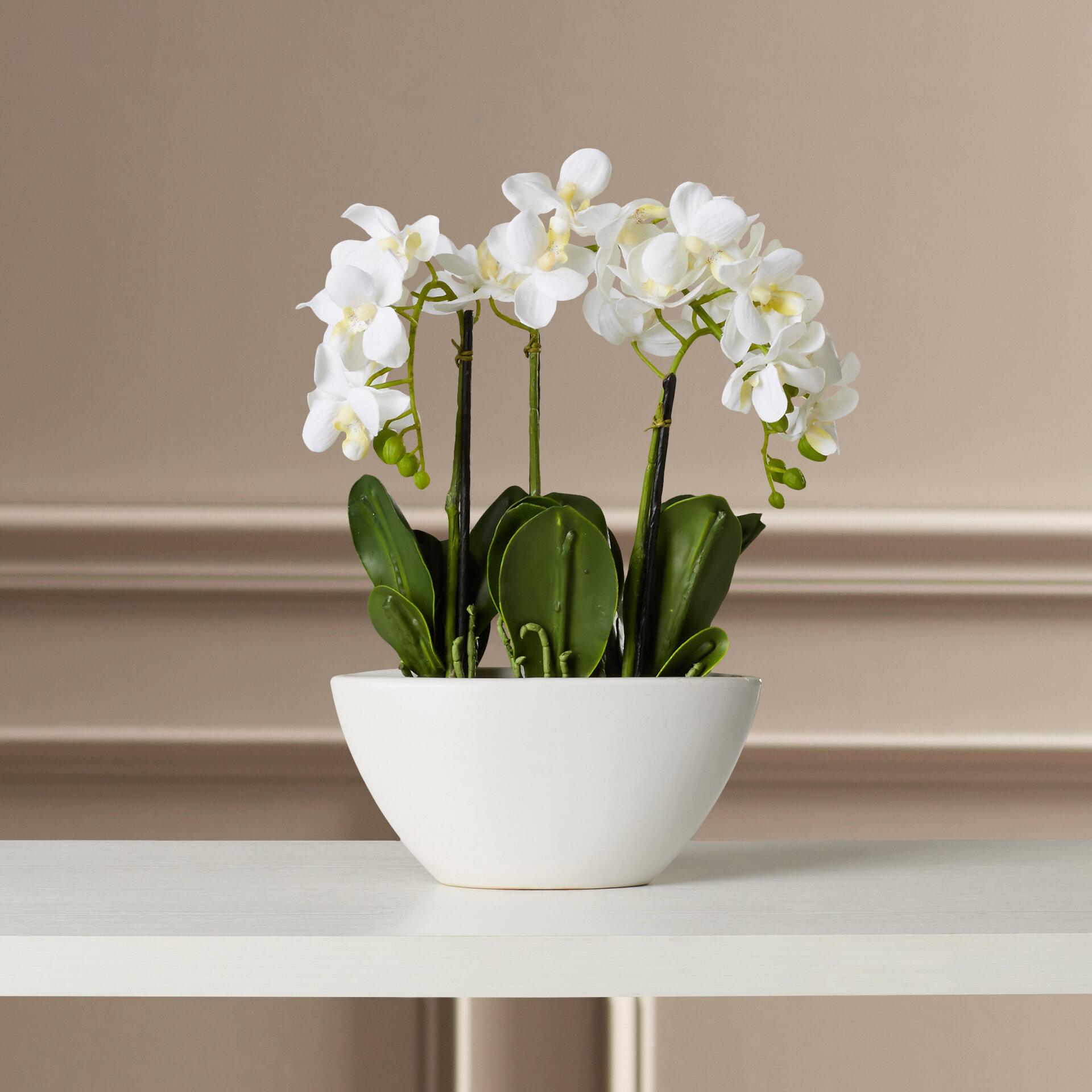 Willa Arlo Interiors Phalaenopsis Silk Flowers In Pot Reviews