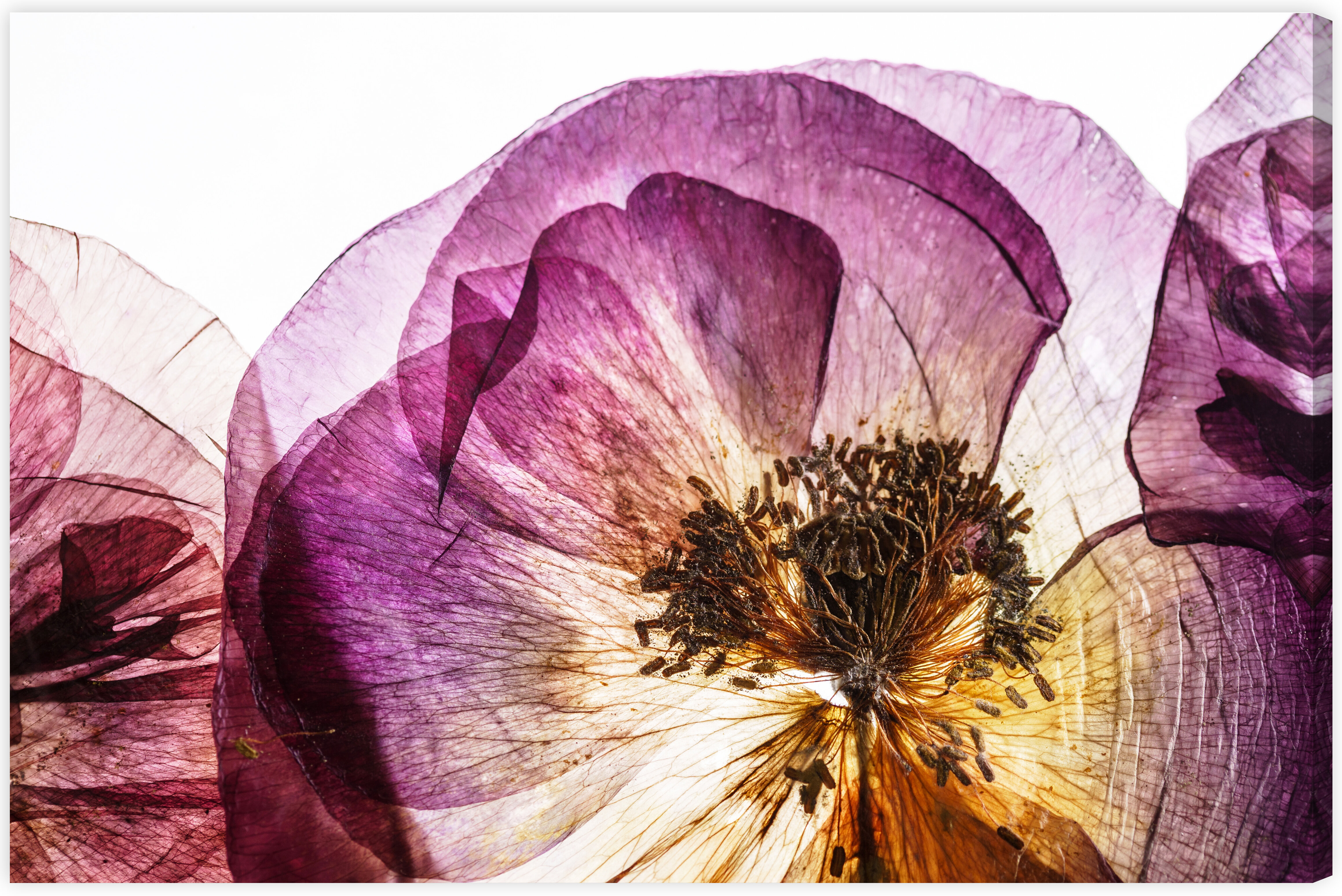 House Of Hampton Dry Poppy Flowers Graphic Art Print On Canvas